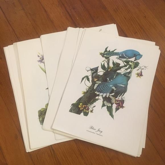 Vintage Birds Book Print Pages Bundle of 39